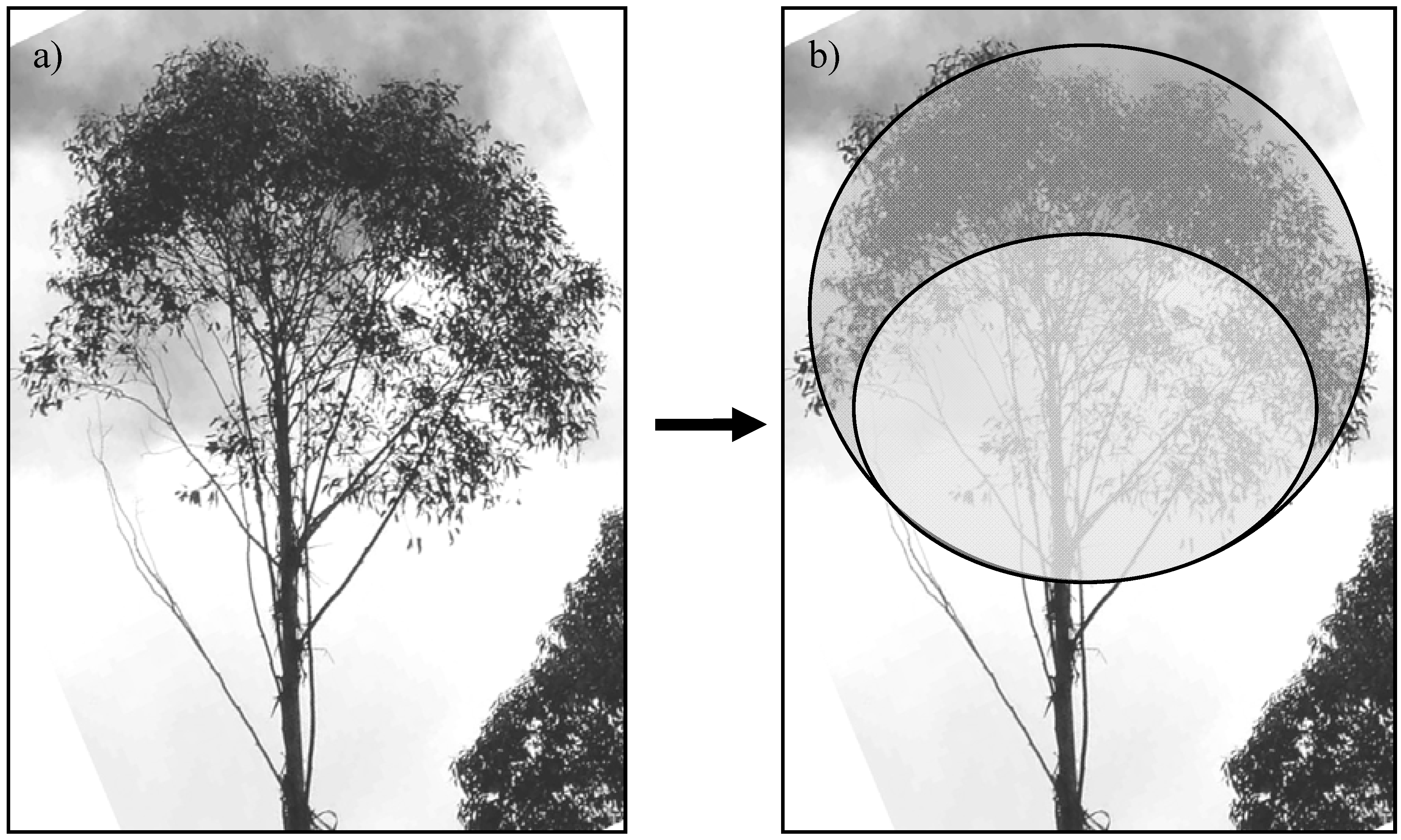 forest canopy diagram 2009 f150 fuse panel forests free full text a methodology for modelling