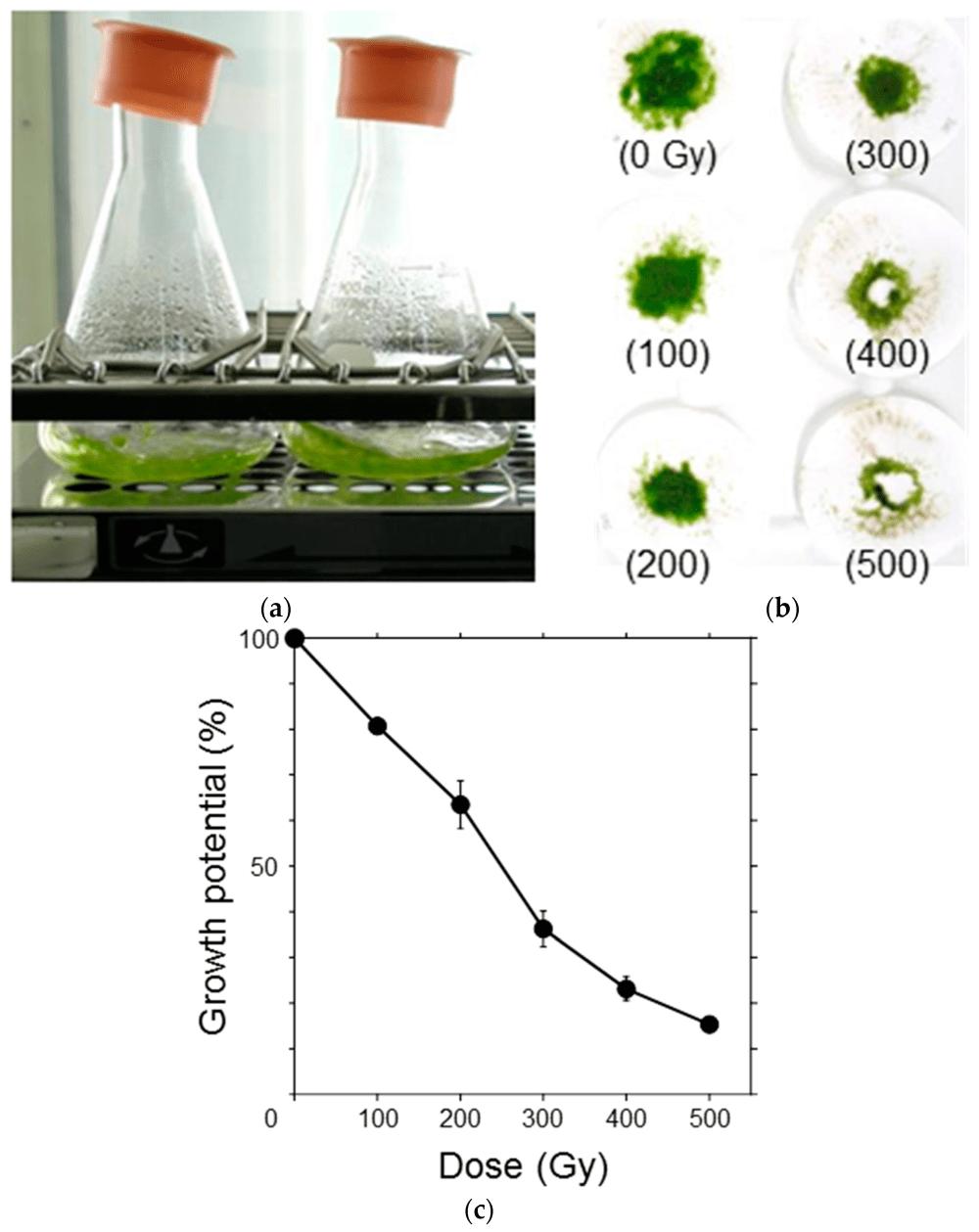 medium resolution of genes 09 00076 g002