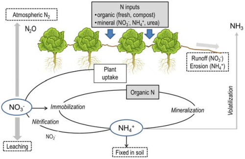 small resolution of horticulturae 03 00025 g002 figure 2 simplified diagram of the nitrogen cycle