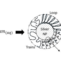 Diagram For 5 Gum Radio Wiring 2005 Chevy Silverado Materials Free Full Text Mesquite As A Novel