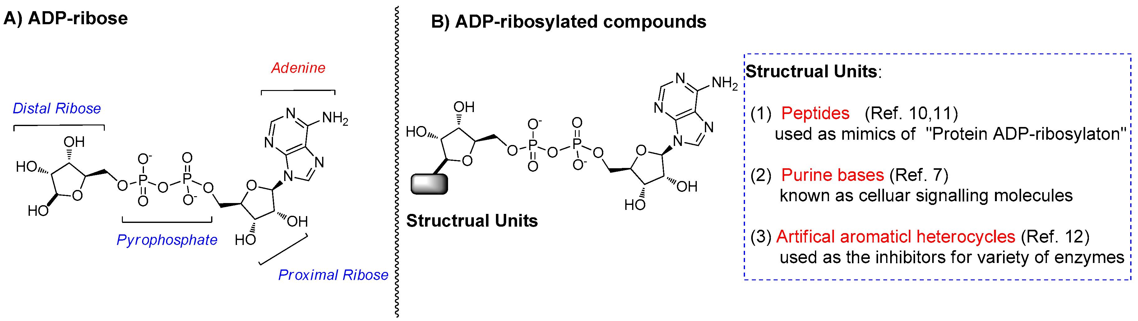 adp molecule diagram labeled ge electric dryer parts molecules free full text ribosyl n3 a versatile