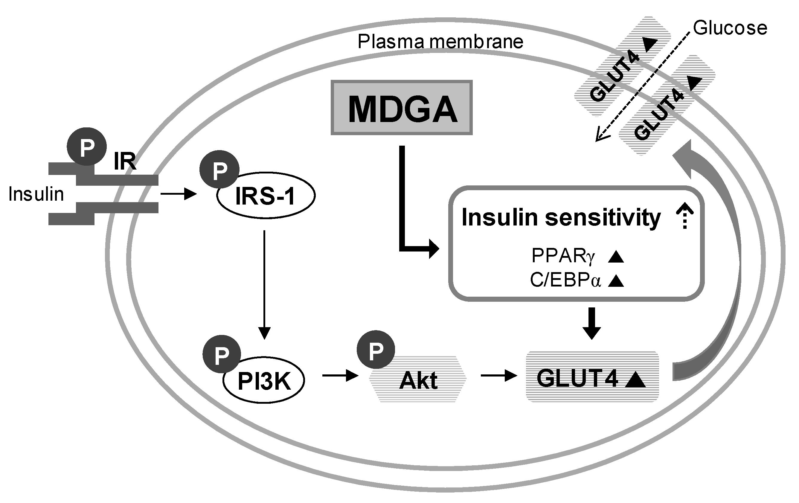 Insulin Glucose Feedback Loop Diagram Wiring Diagrams
