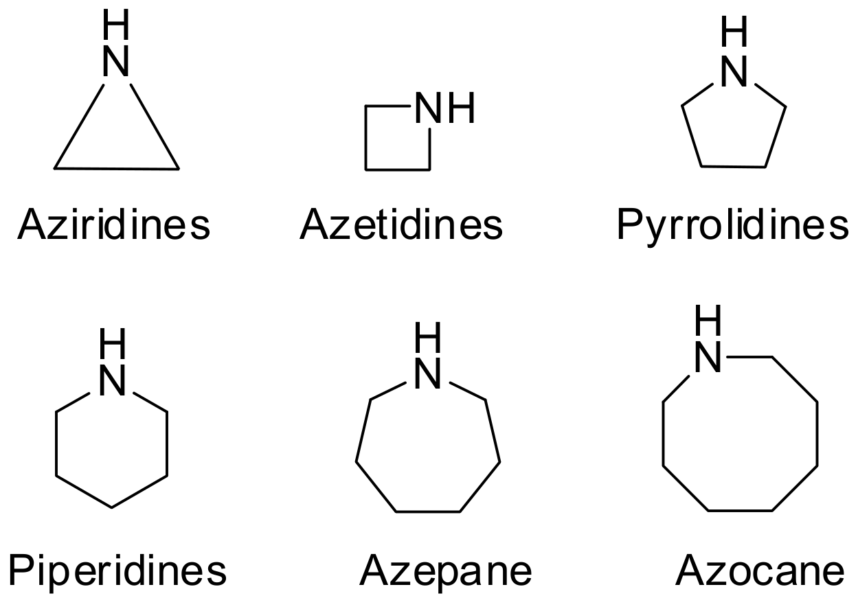 List Of Synonyms And Antonyms Of The Word Cyclic Amines