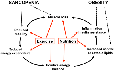 Nutrients | Free Full-Text | Exercise and Nutrition ...
