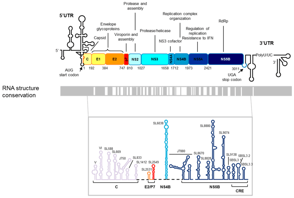 medium resolution of pharmaceuticals free full text potential of the other geneticdiagram of genetic organization 9