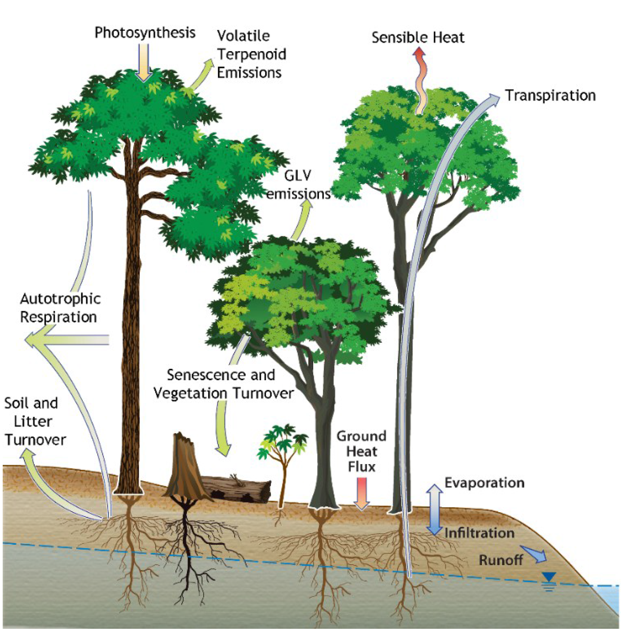 diagram of a tropical forest wire for trailer plug plants free full text green leaf volatile emissions