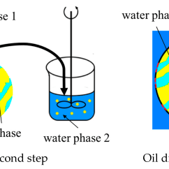 Polyethylene Phase Diagram Plant Cell To Label Polymers Free Full Text The Construction Of An Aqueous