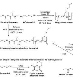 polymers free full text enzymatic synthesis of biobased polyesters and polyamides html [ 3503 x 2111 Pixel ]