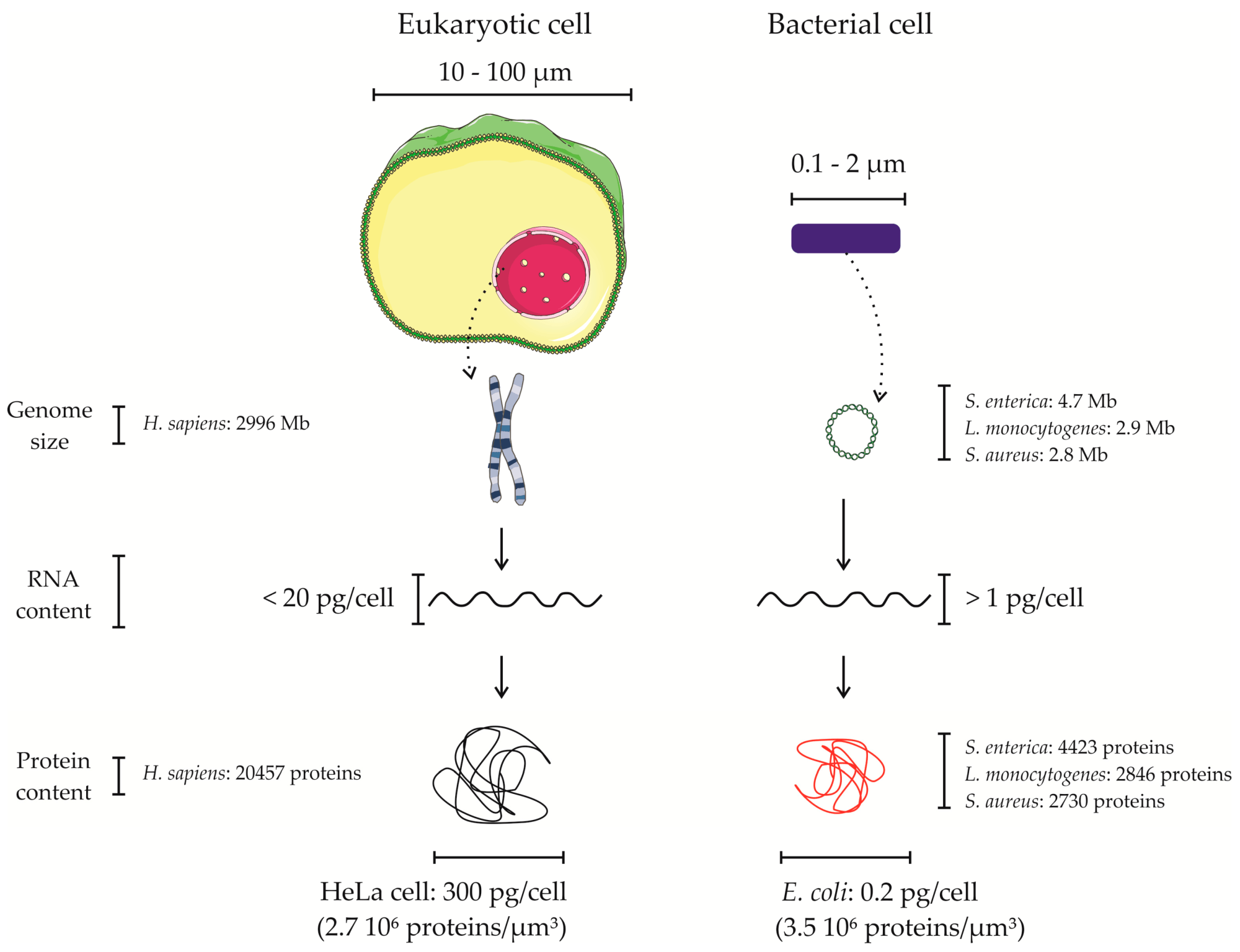 hight resolution of proteomes 05 00026 g001