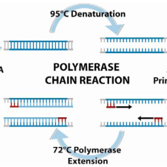 Polymerase Chain Reaction Diagram 2002 Pontiac Grand Am Gt Stereo Wiring Sensors Free Full Text Nucleic Acid Based Detection Of