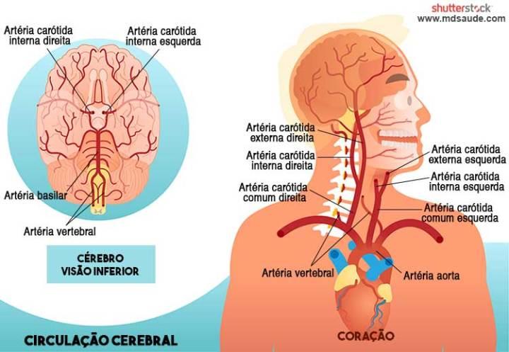 Circulação cerebral - artérias carótida interna e carótica externa.