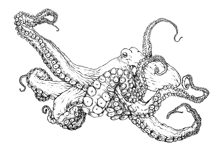 Common Octopus Coloring Page To Print Mdubillustrations