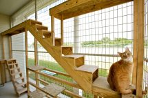 Luxury Cat Boarding In Houston Meadowlake Pet Resort