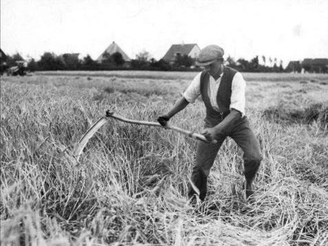 A black and white photo of a person wearing a hat, a dark vest, white shirt, and tan pants using a sickle to harvest grains. Lughnasadh