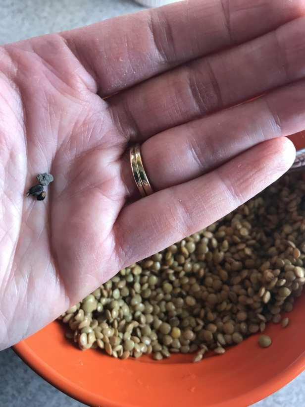 pebbles I found in my lentils