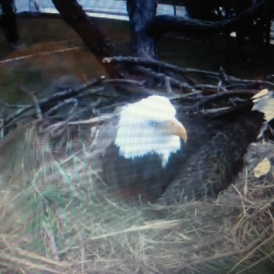 Eagle Cam and Ozzie and Harriet