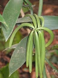 plants.7