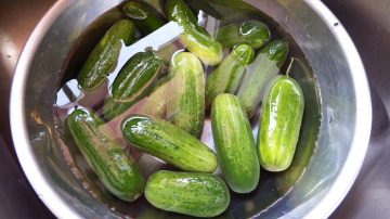 Wash the cucumbers in a stainless steel or large glass bowl.