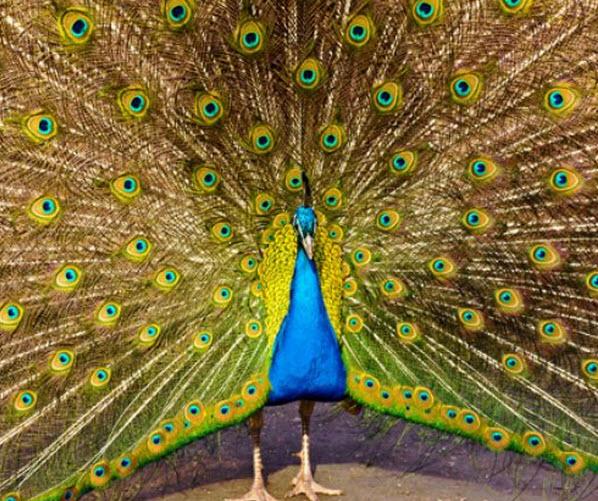 blue bird5