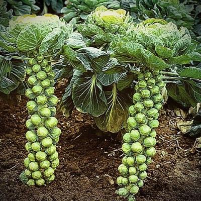 Green Bean Casserole…it Ain't!