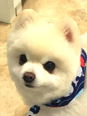 Jesse James, our pom