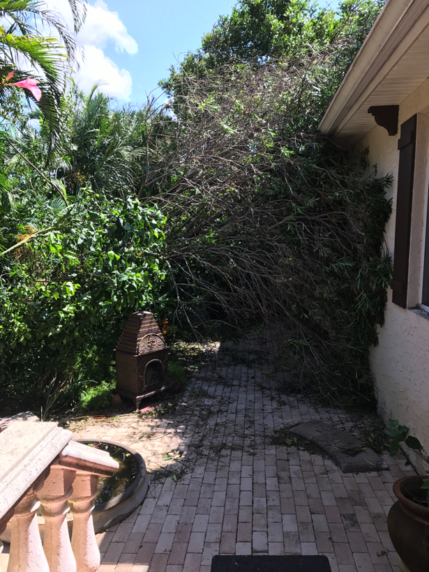 The clean up begins as we chop up the oleander bush/tree in the Secret Garden.