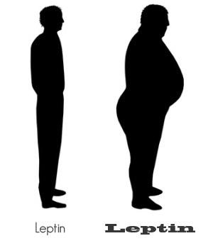 leptin_amounts