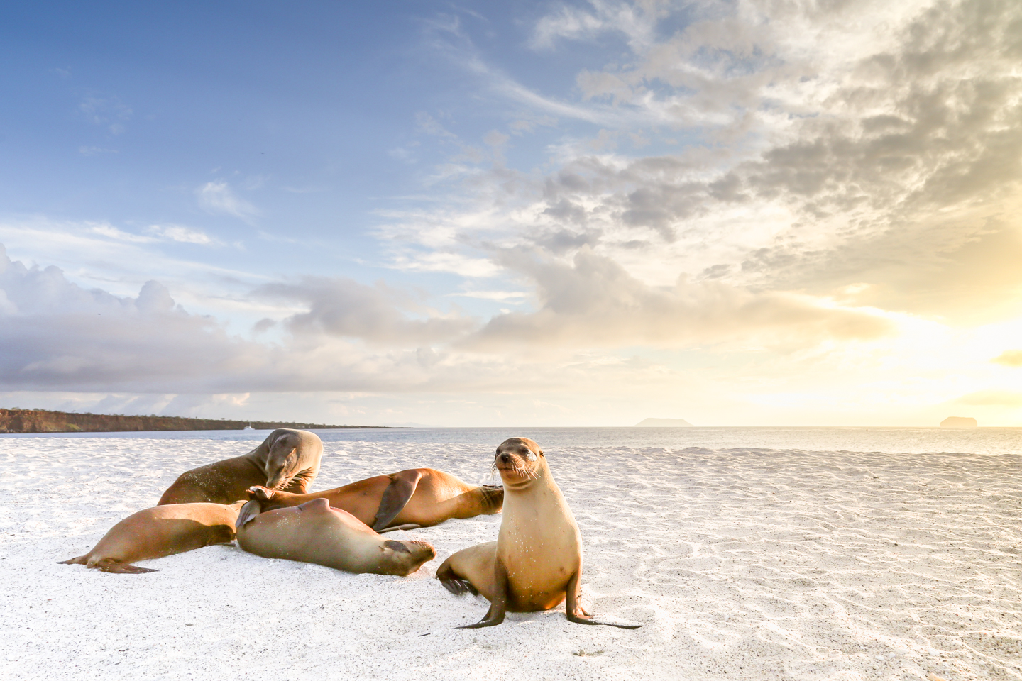 Postcards from the Galapagos Islands