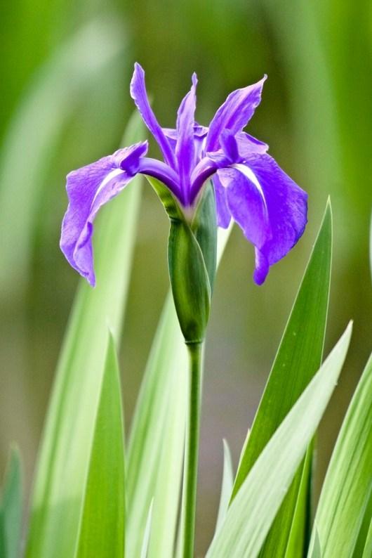 mito flower 5