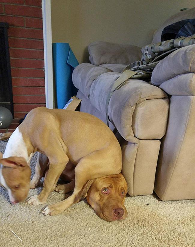 29-cachorros-folgados-que-nao-estao-nem-ai-pra-privacidade-dos-outros7