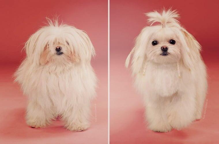 cabeleireiros-e-o-dom-de-deixar-um-cachorro-irreconhecivel