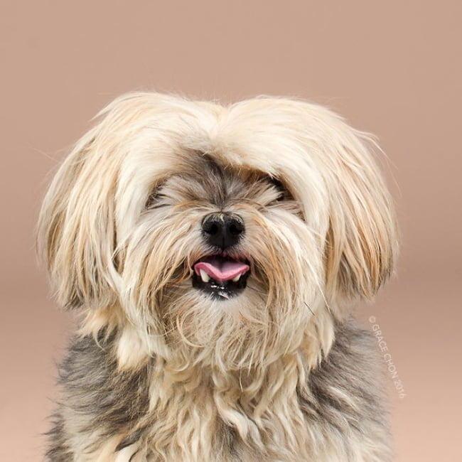 cabeleireiros-e-o-dom-de-deixar-um-cachorro-irreconhecivel3