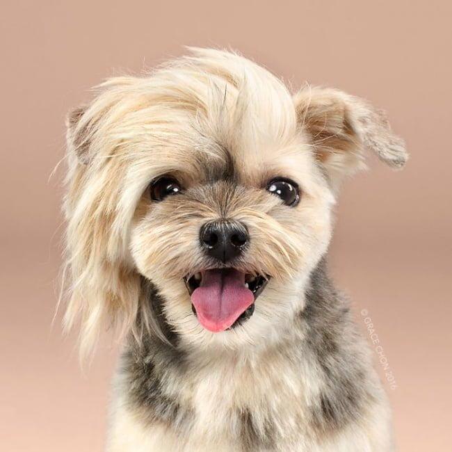 cabeleireiros-e-o-dom-de-deixar-um-cachorro-irreconhecivel4