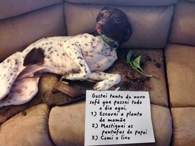 19-motivos-para-entender-e-perdoar-seu-cachorro1