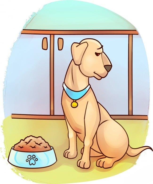 se-algum-destes-sintomas-aparecer-leve-seu-bichinho-imediatamente-ao-veterinario3
