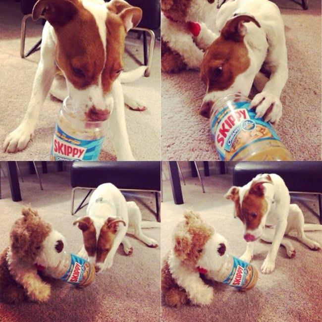 20-fotos-de-cachorros-completamente-felizes-com-a-situacao-em-que-estao12