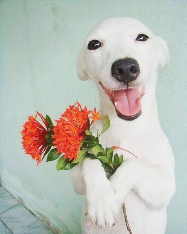 20-fotos-de-cachorros-completamente-felizes-com-a-situacao-em-que-estao14