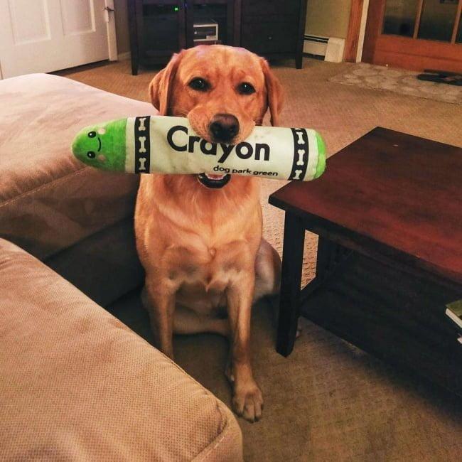 20-fotos-de-cachorros-completamente-felizes-com-a-situacao-em-que-estao19