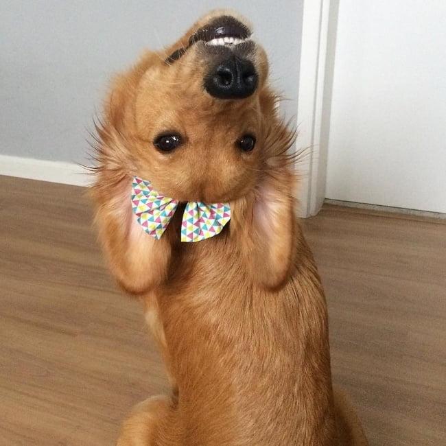 20-fotos-de-cachorros-completamente-felizes-com-a-situacao-em-que-estao8