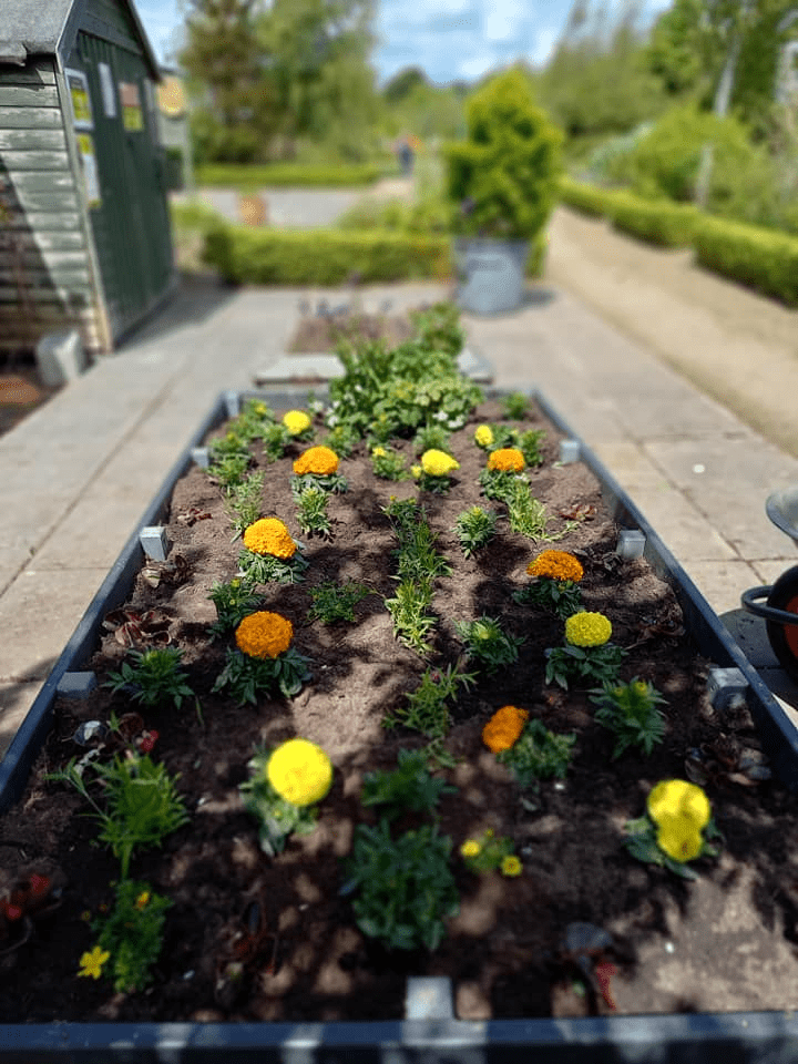 A picture containing outdoor, garden, curb Description automatically generated