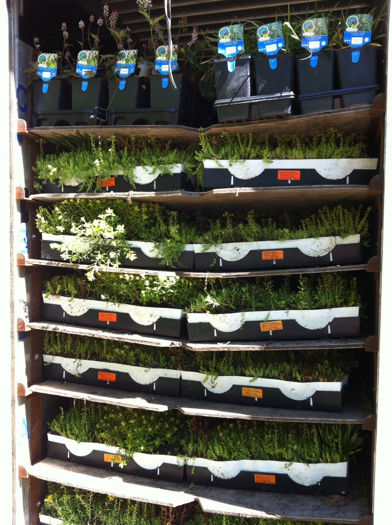 roof plants arrive