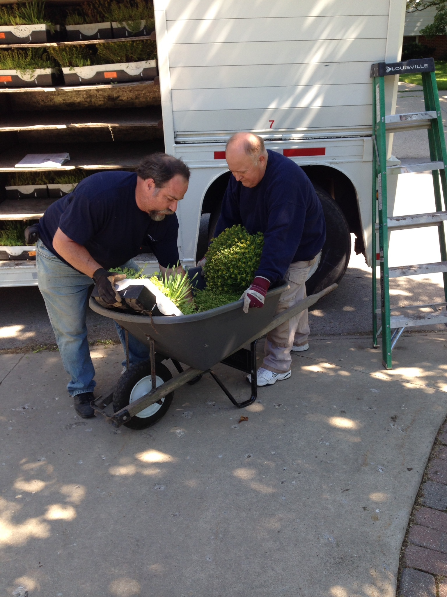 roof plant delivery
