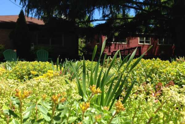 garden studio vegetated roof