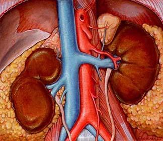 Chronic Kidney Disease  MedHealthnet