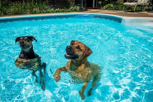 Is It Safe To Let Dogs Swim In Pools Pool Heat Pumps Pool Heater Repair Pool Services