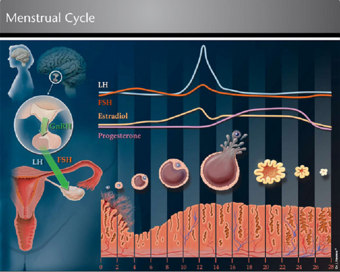 menstrual cycle diagram with ovulation air pressure switch wiring induction medbroadcast com the and role of hormones