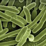 D'où viennent les toxines?
