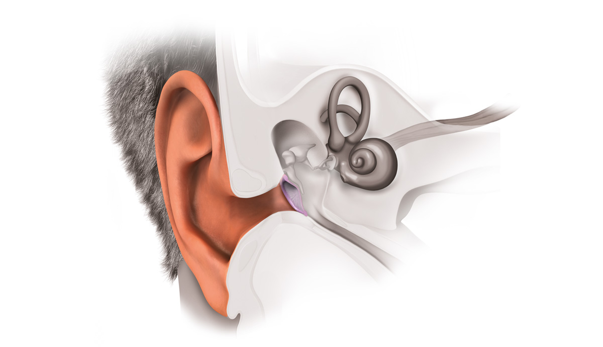 hight resolution of the outer ear