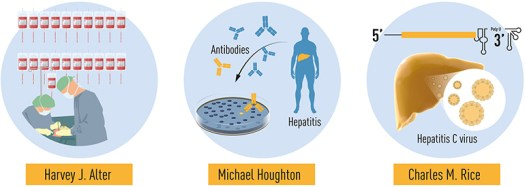 Discovery of Hepatitis C Wins Nobel Prize in Physiology or Medicine 4