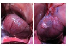 Spray-On Hydrogel to Prevent Post-Surgery Adhesions 4